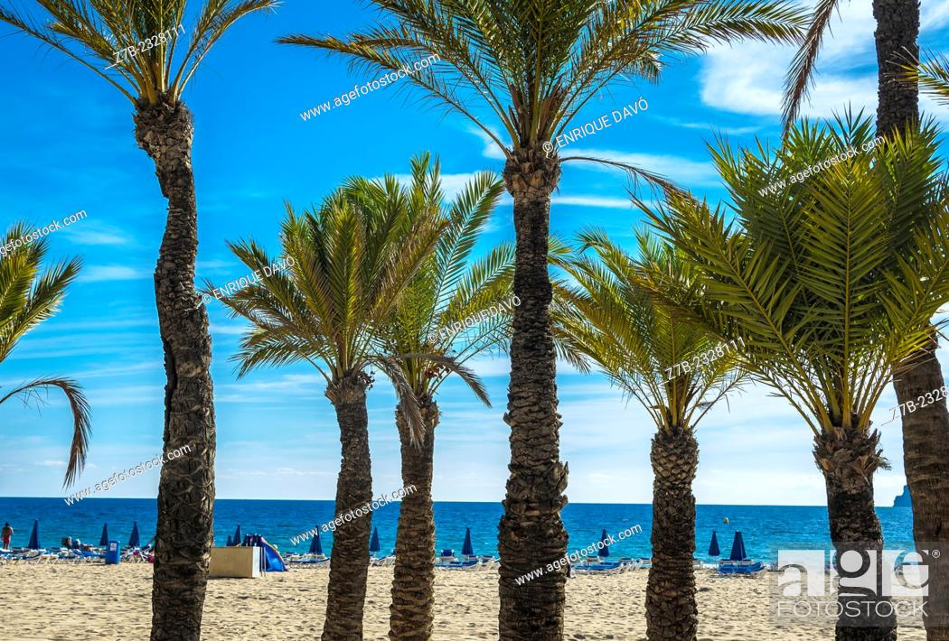 Stock Photo: View of some closed sunshides in Benidorm beach, Alicante zone, Spain.