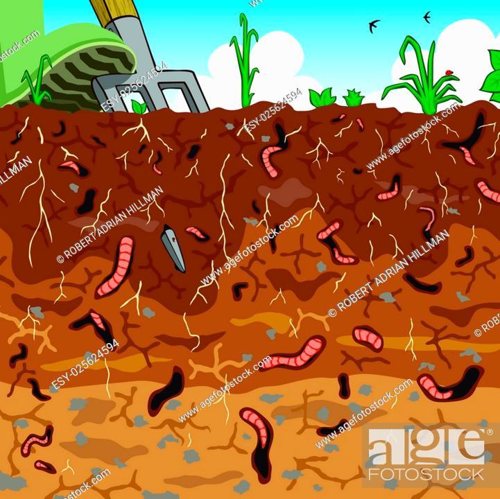 Stock Vector: Editable vector illustration of earthworms in garden soil.