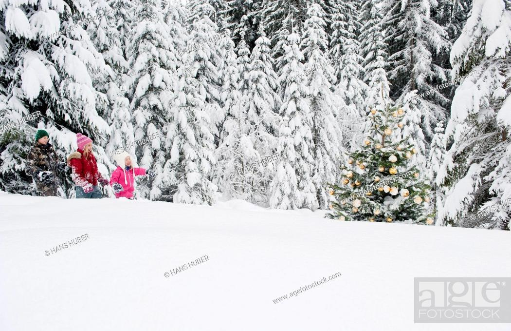 Stock Photo: Austria, Salzburg County, Boy and girl walking through snow and watching christmas tree.