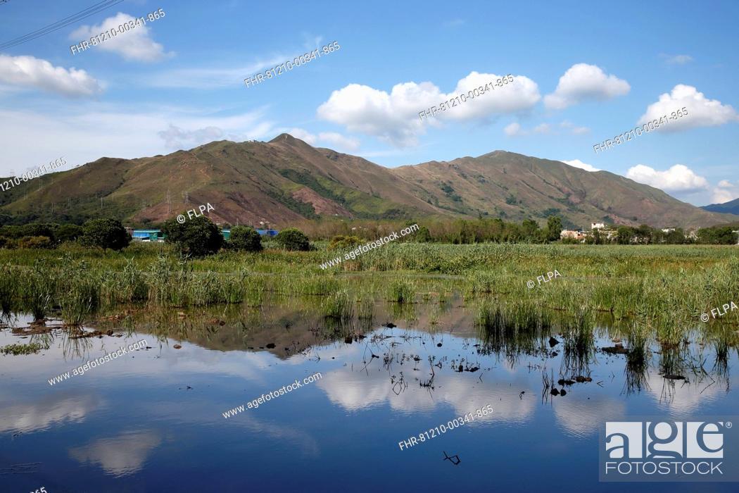 Stock Photo: View of marshland habitat, Sha Po Marsh, New Territories, Hong Kong, China, May.