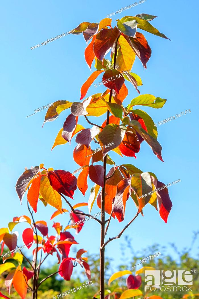 Stock Photo: Autumn new tree with the blue sky background.