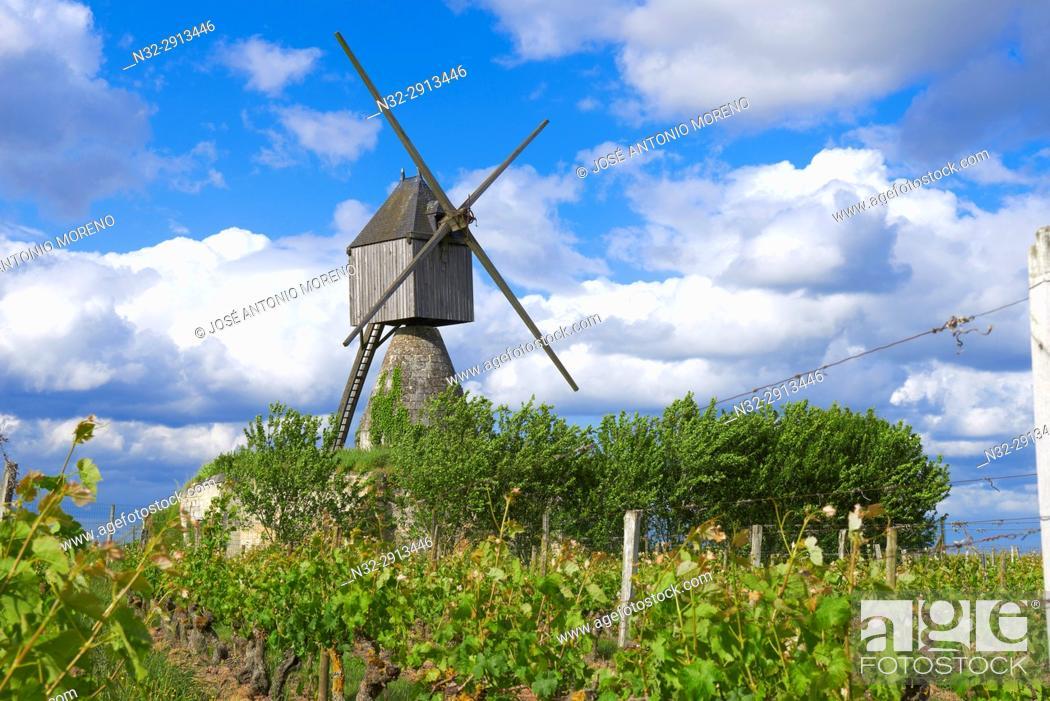 Stock Photo: Montsoreau, Loire River, Windmill and vineyard near Montsoreau, Labelled Les Plus Beaux Villages de France, The Most Beautiful Villages of France.