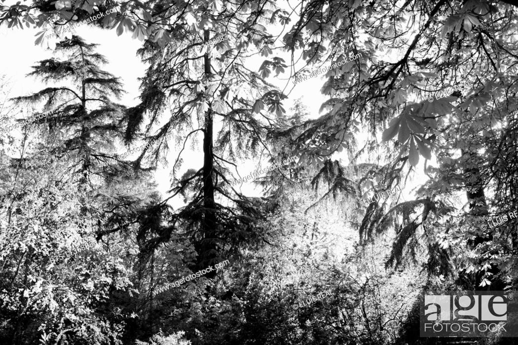 Stock Photo: Trees, Parque del Retiro, Madrid, Spain.