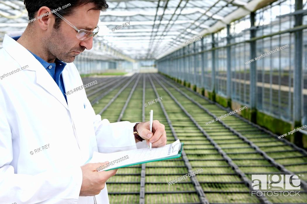 Stock Photo: Germany, Bavaria, Munich, Scientist in greenhouse examining bed with seedlings.