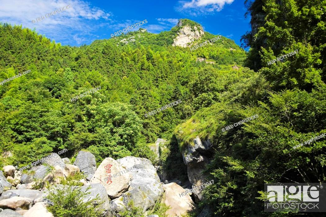 Stock Photo: Trees on the hillside, Emerald Valley, Huangshan, Anhui Province, China.