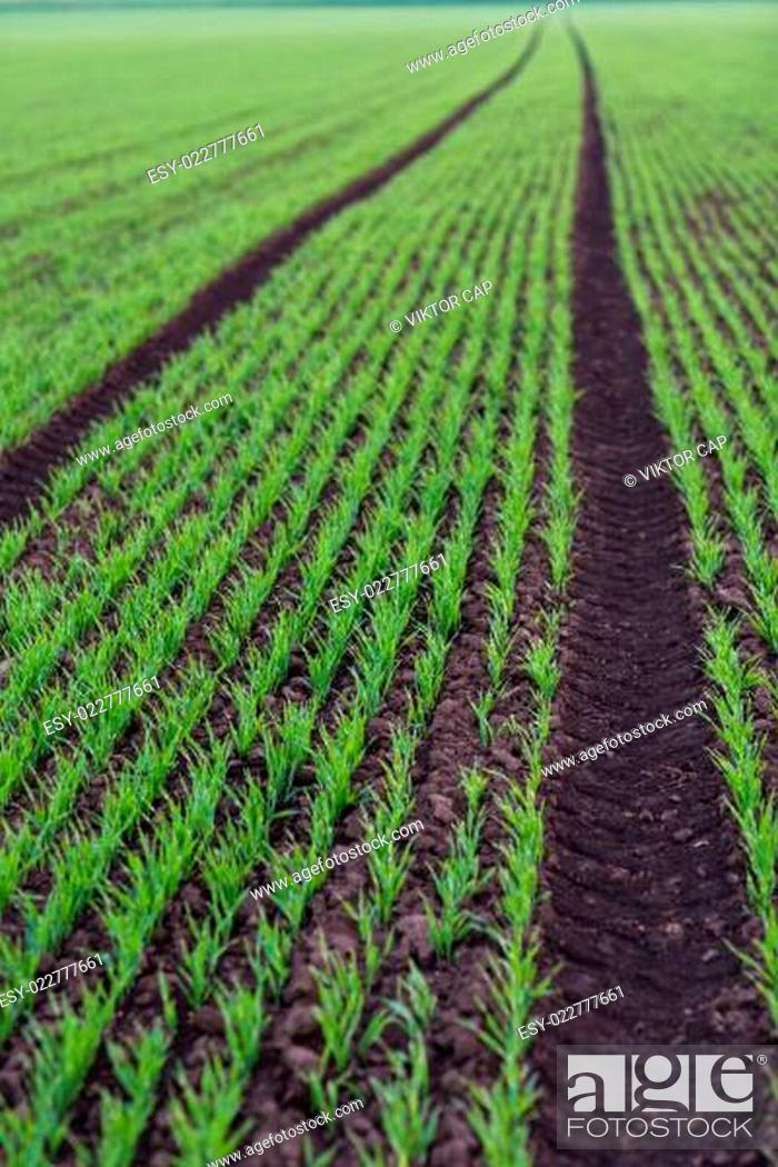 Stock Photo: Converging lines of agricultural landscape.