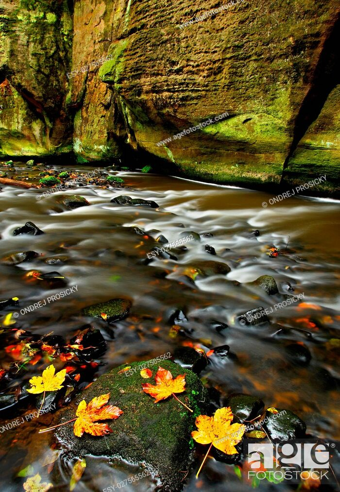 Stock Photo: Autumn landscape with orange and yellow leaves in the water, big.
