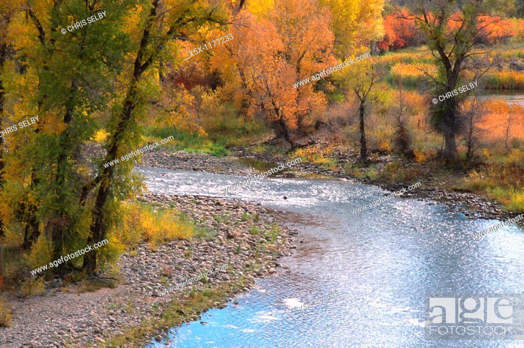 Stock Photo: Fall colors along the Yampa River near Steamboat Springs, Colorado, USA.