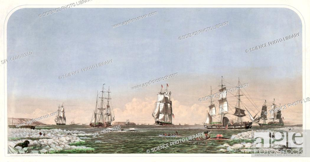 Stock Photo: Whaling ships at sea. Historical artwork of ships hunting right whales in the Bering Straits.