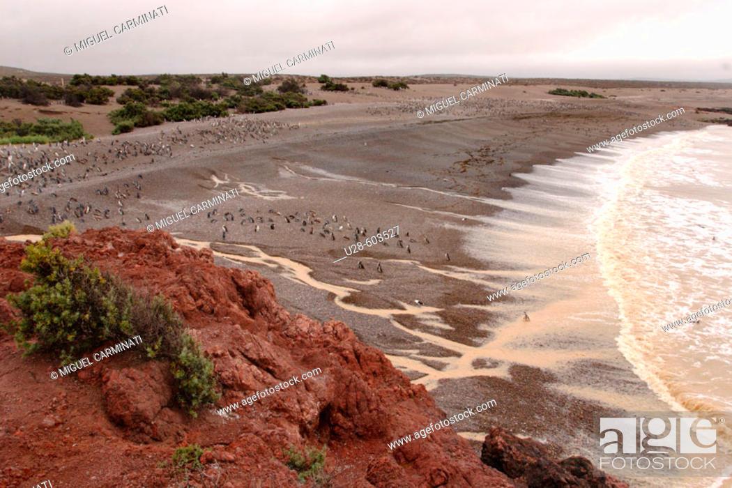 Stock Photo: Penguins.