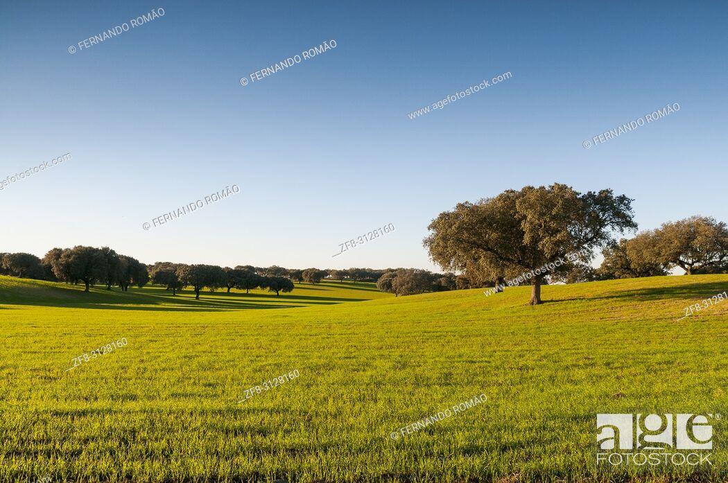 Imagen: Montado at alentejo region, Portugal.
