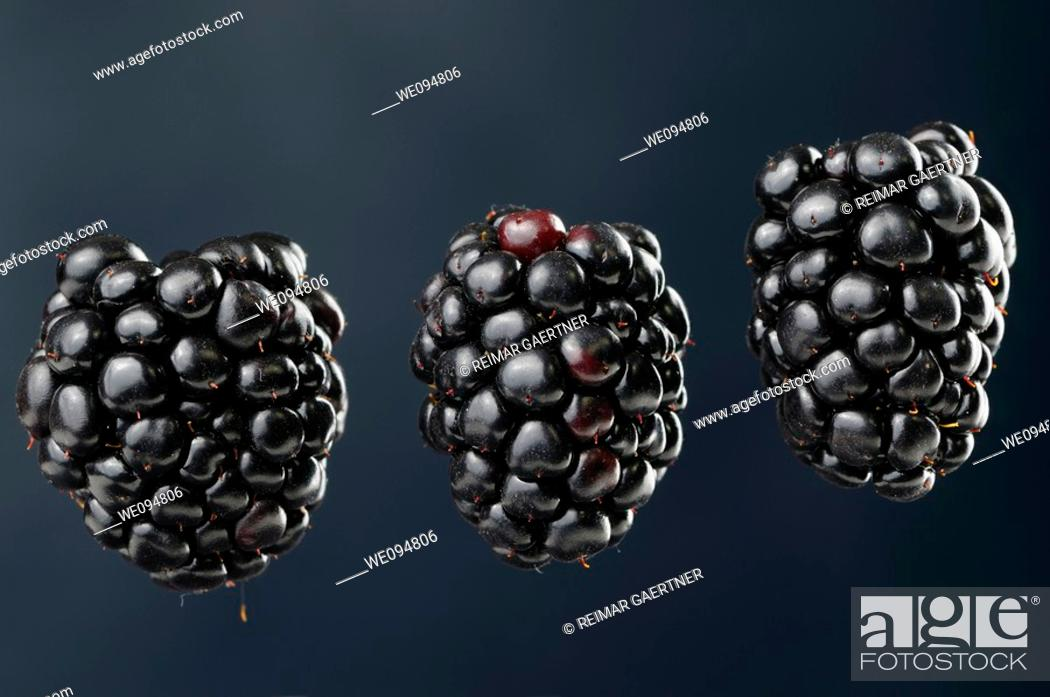 Stock Photo: Three suspended blackberries an aggregate fruit named Rubus fruticosus on a blue background.