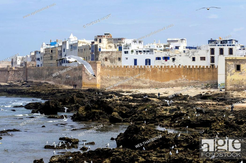 Stock Photo: Morocco, Essaouira, Kasbah, seagulls in front of town.