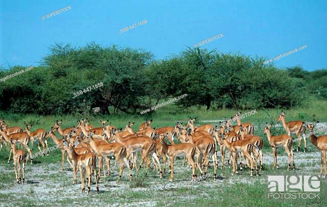 Stock Photo: Linyanti Swamp Botswana.