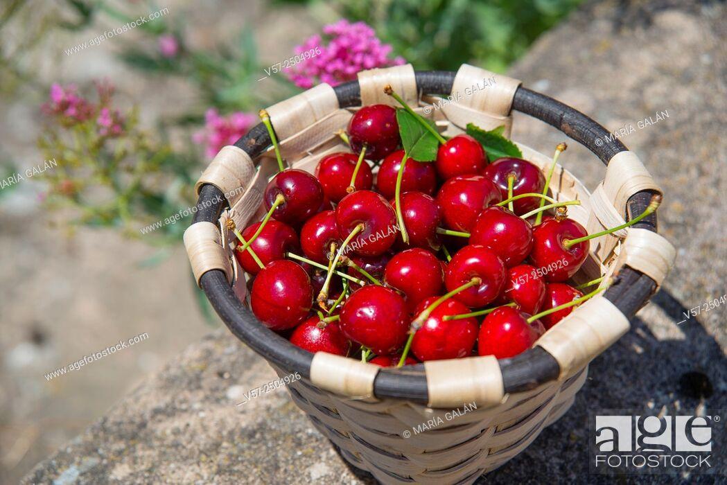 Stock Photo: Basket of cherries.