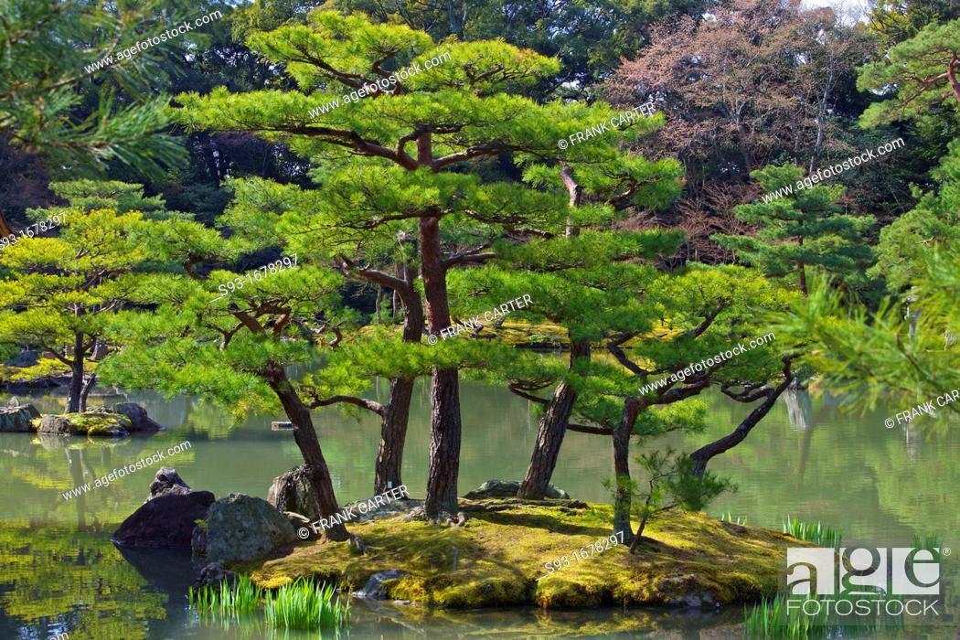 Stock Photo: A view of the Kingaku-ji temple pond.