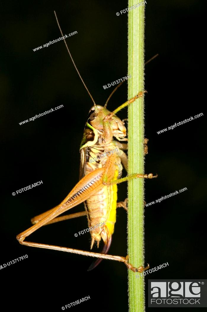 Stock Photo: wiesenbewohner, alfred, animal, animals, bite-frighten, blade of grass.