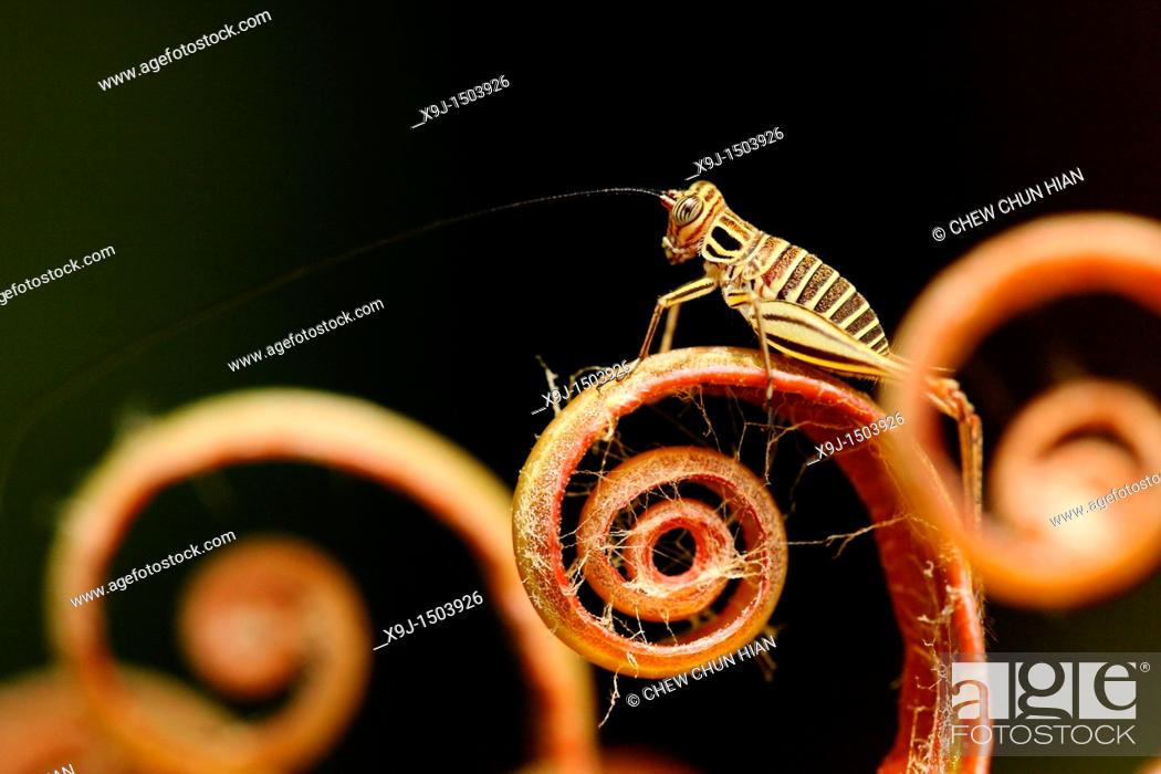 Stock Photo: fern leaves and grasshopper.