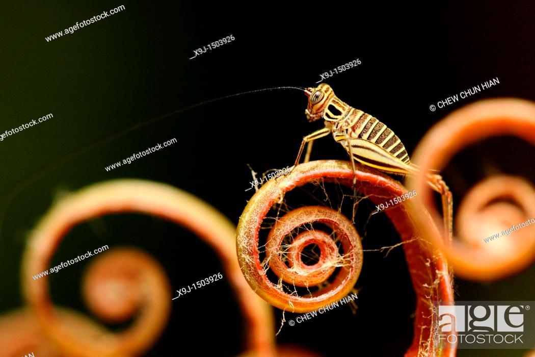Stock Photo: fern leaves and grasshopper.