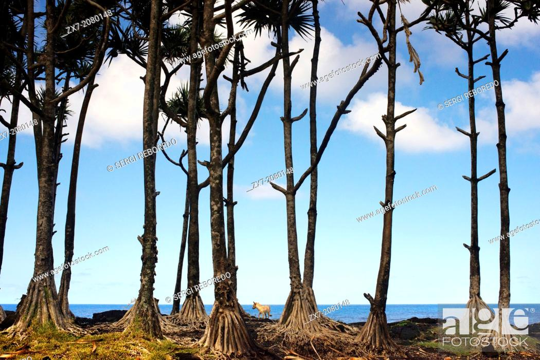 Stock Photo: Palm trees in a giant volcanic arabe ou Les Puits volcanique garden near St. Philippe. An instructive tour of the coast of the table ahead of Tremblet.