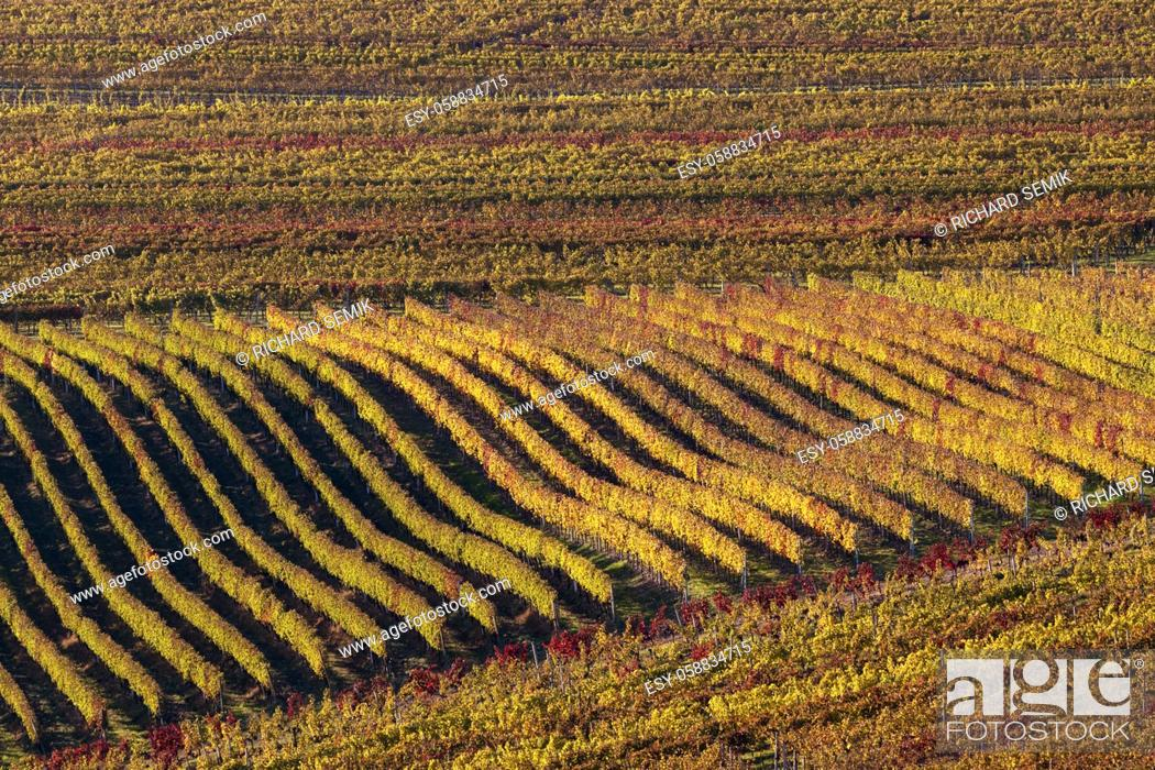 Imagen: Autumn in moravian vineyards near Velke Bilovice, Southern Moravia, Czech Republic.