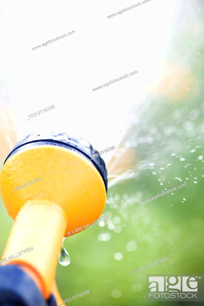 Stock Photo: Watering garden plants with yellow sprinkler.