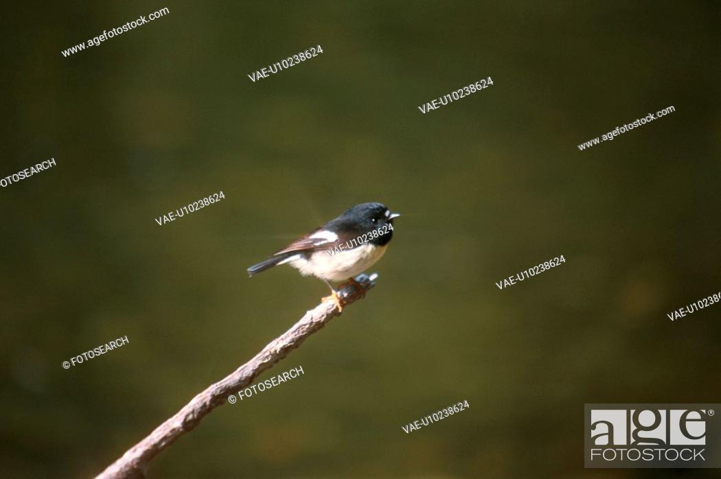 Stock Photo: Bird Perching On Branch.