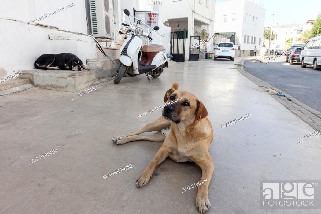 Stock Photo: Stray dog on pedestrian walkway in Bodrum, Turkey.