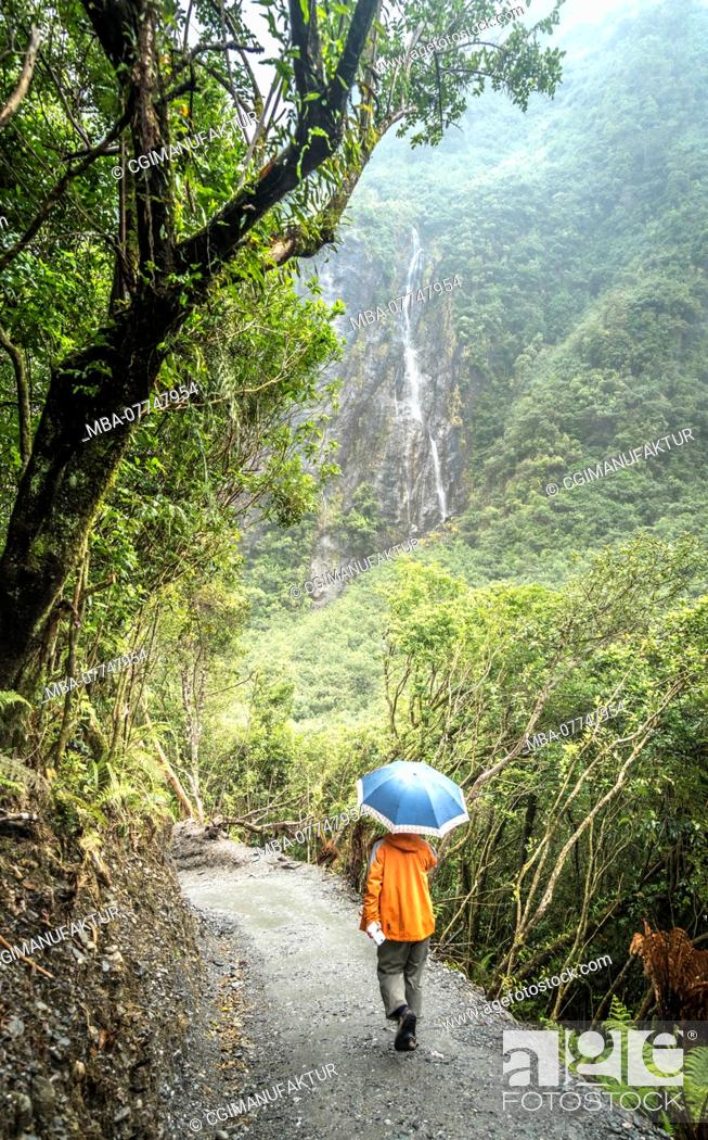 Stock Photo: New Zealand, person with umbrella on the way to Franz Josef glacier.