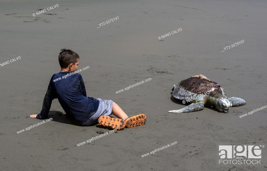 Stock Photo: Kid sits next to dead hawksbill sea turtle (Eretmochelys imbricata) killed by boat propeller in Ladrilleros, Pacific Coast of Colombia.