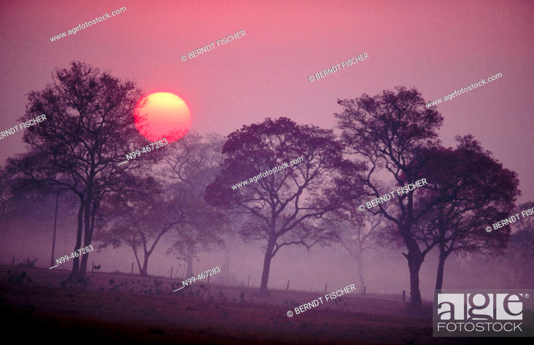 Stock Photo: Sunrise over dry pasture and rose trumpet trees. Pantanal near Pocone. Mato Grosso. Brazil.