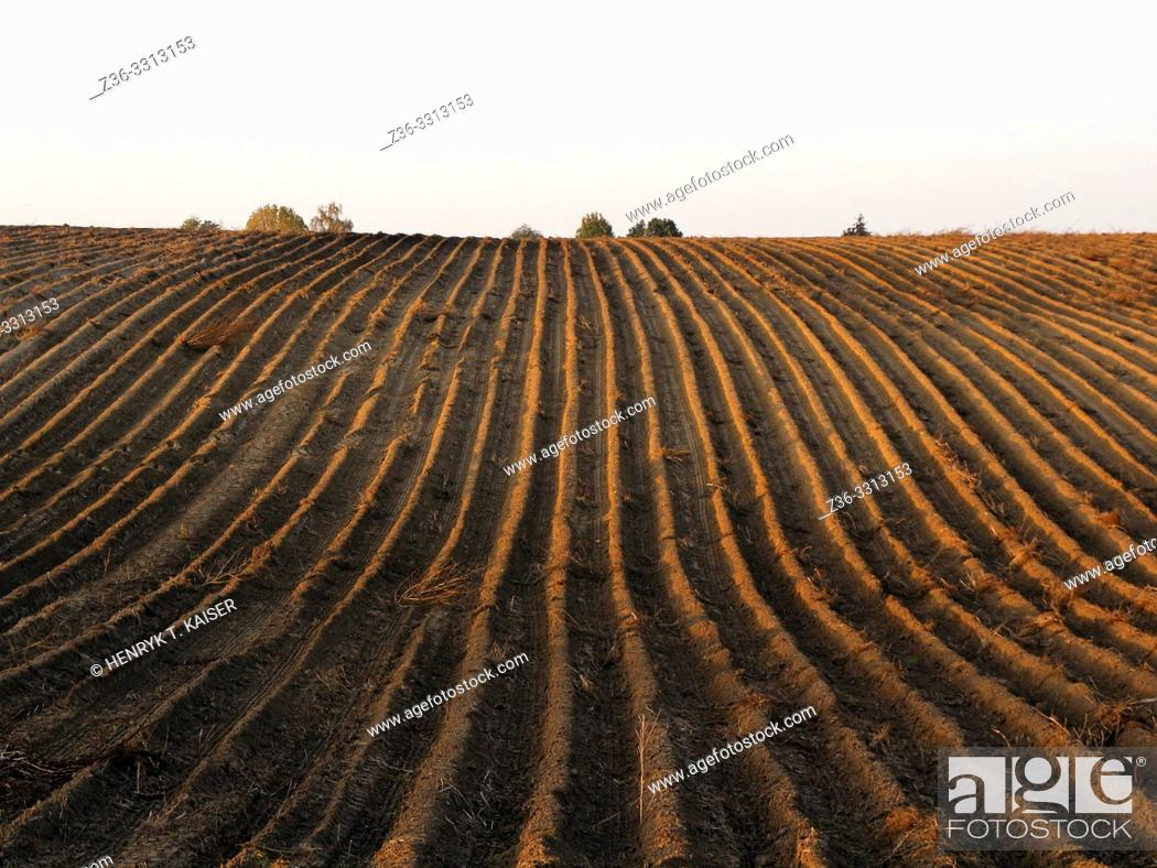 Stock Photo: Agriculture in Lasser Poland.