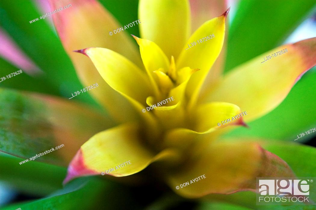 Stock Photo: Yellow is a flower.
