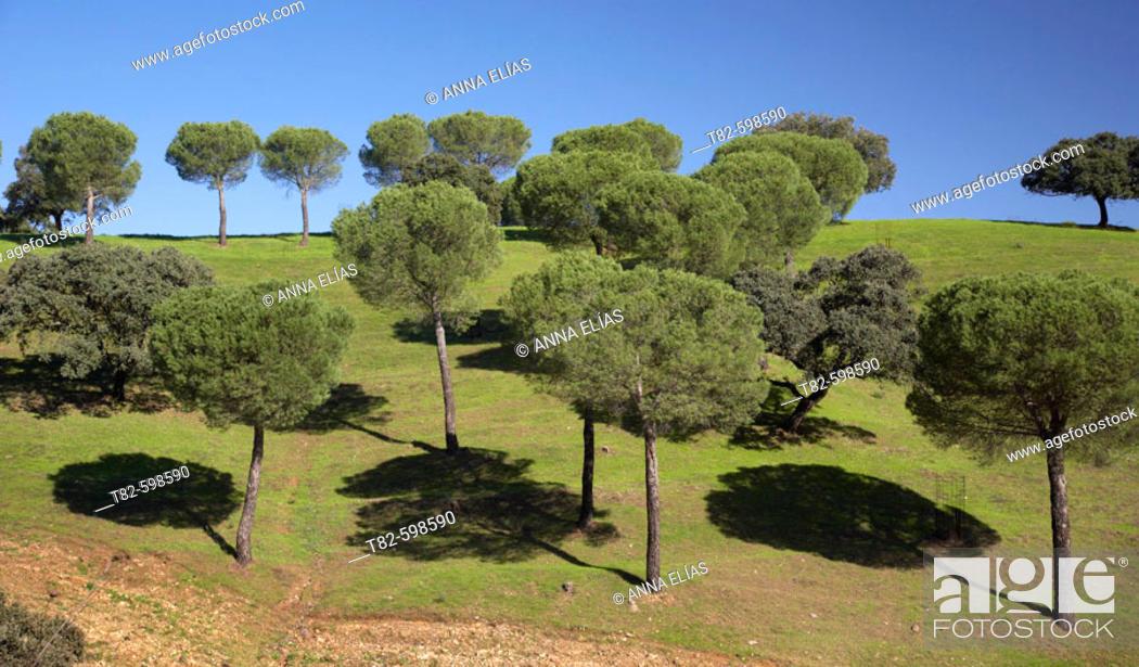 Stock Photo: Sierra Norte de Sevilla Natural Park, Sierra Morena. Cazalla de la Sierra, Sevilla province, Andalusia, Spain.