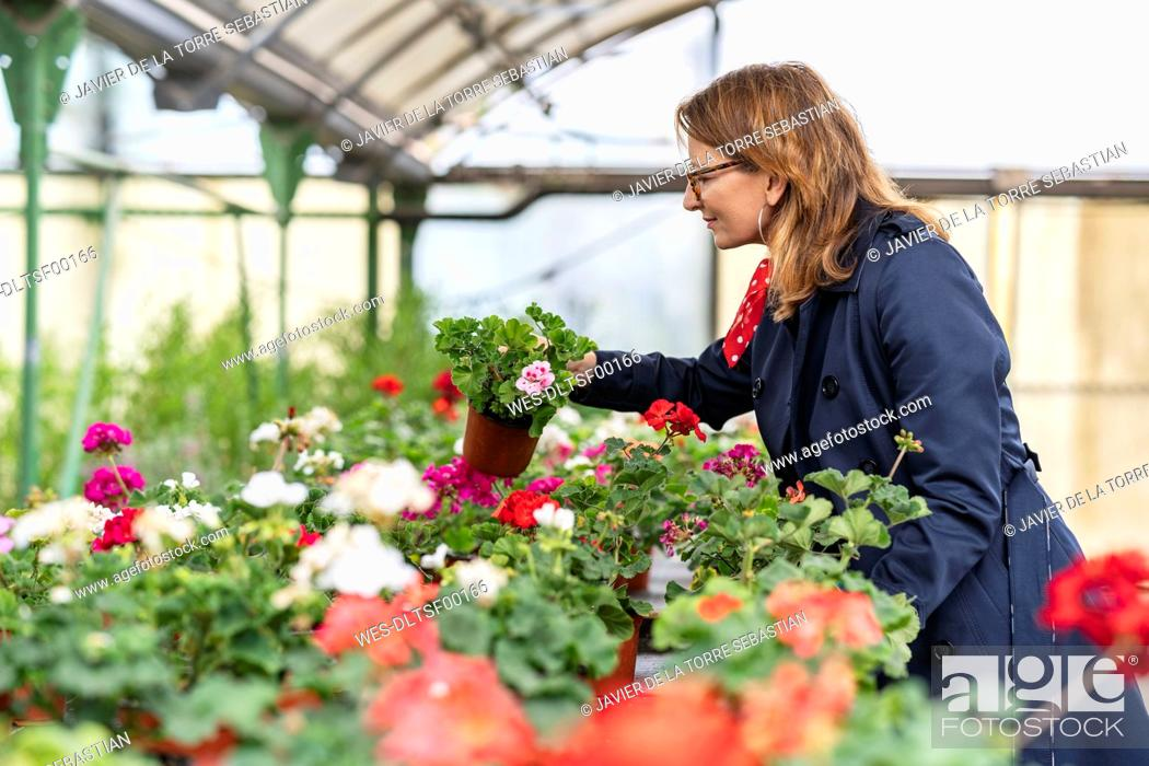Stock Photo: Woman buying flowers in plant nursery.