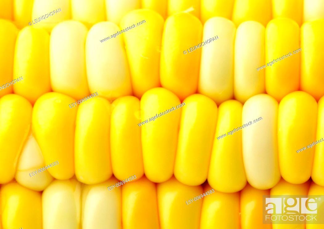 Stock Photo: corn cob.