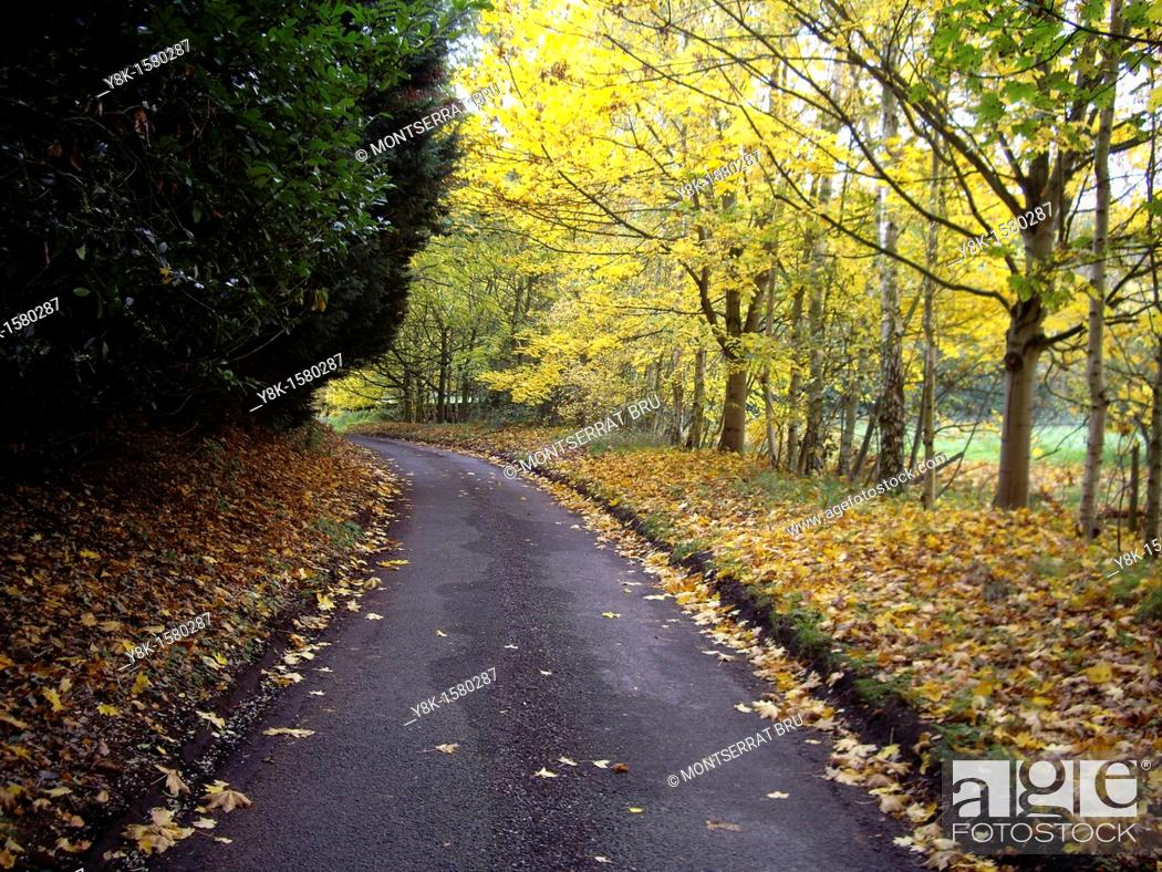 Stock Photo: Country road in Autumn.