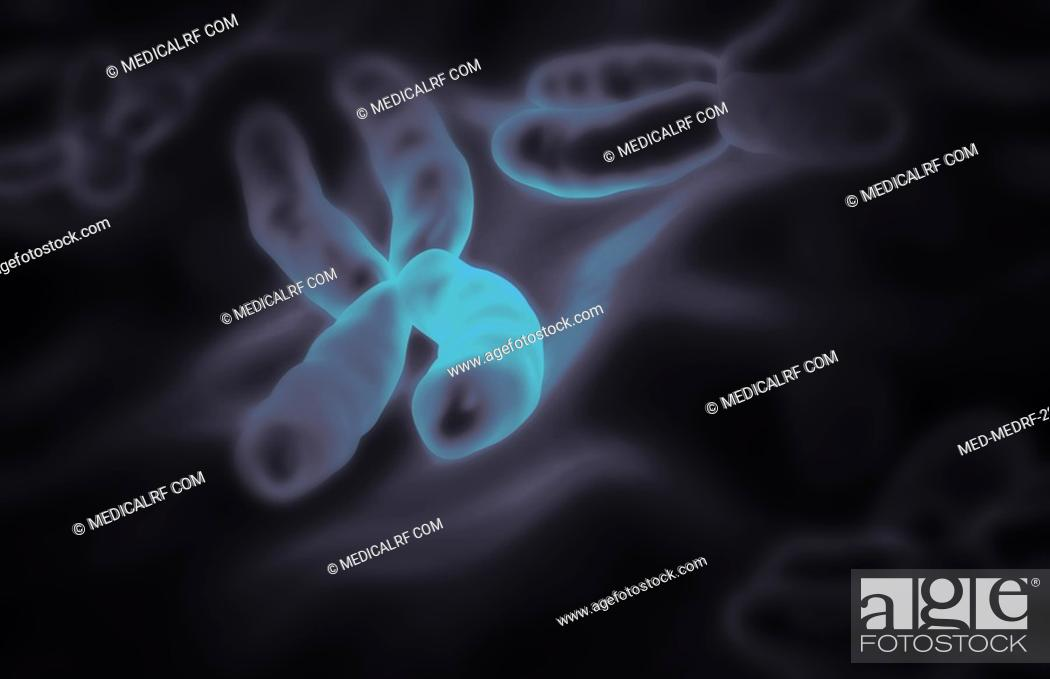 Stock Photo: Chromosomes.
