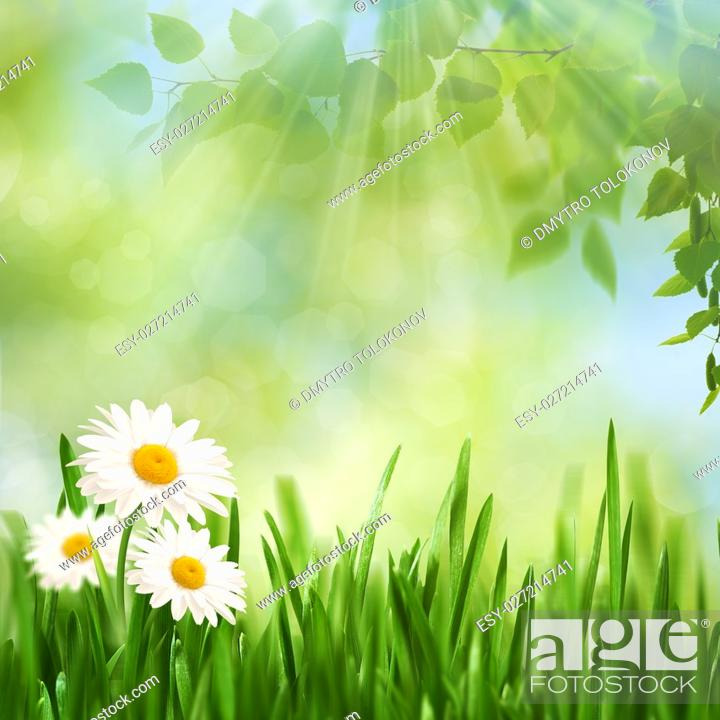 Stock Photo: Beauty noon time on the summer meadow, abstract seasonal backgrounds.
