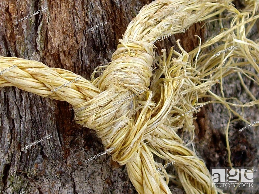Stock Photo: Knot on tree trunk.