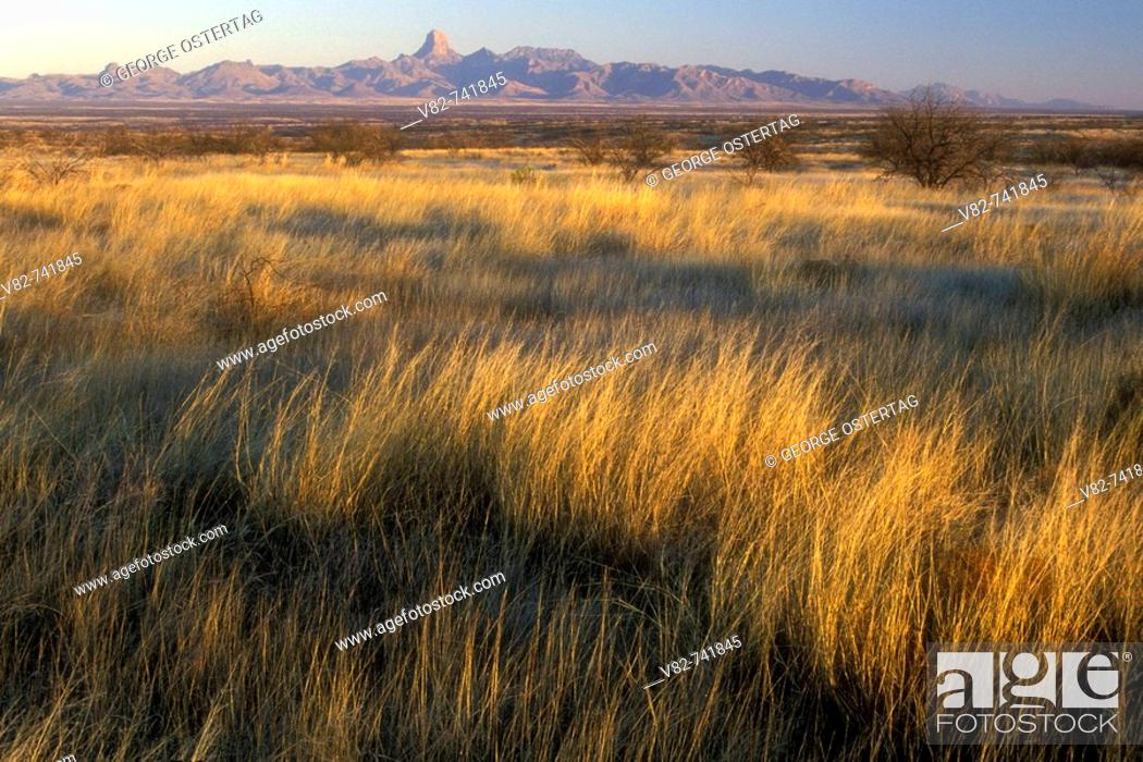 Stock Photo: Grassland, Buenos Aires National Wildlife Refuge, Arizona, USA.