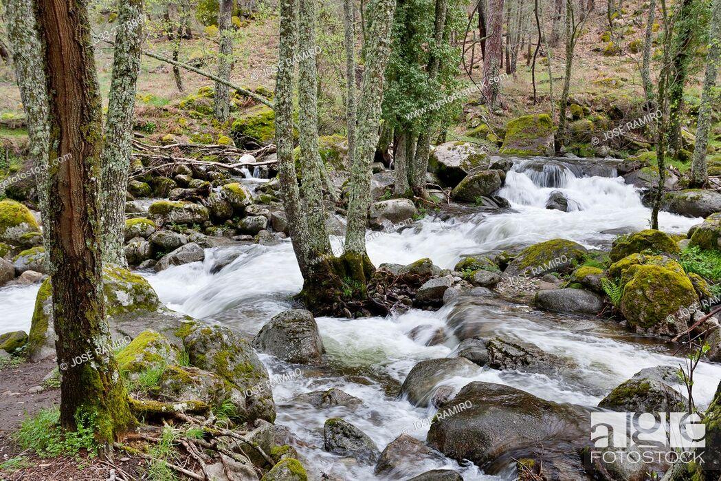 Stock Photo: Serrezuelas stream in the Sierra de Gredos. Avila. Castilla Leon. Spain. Europe.