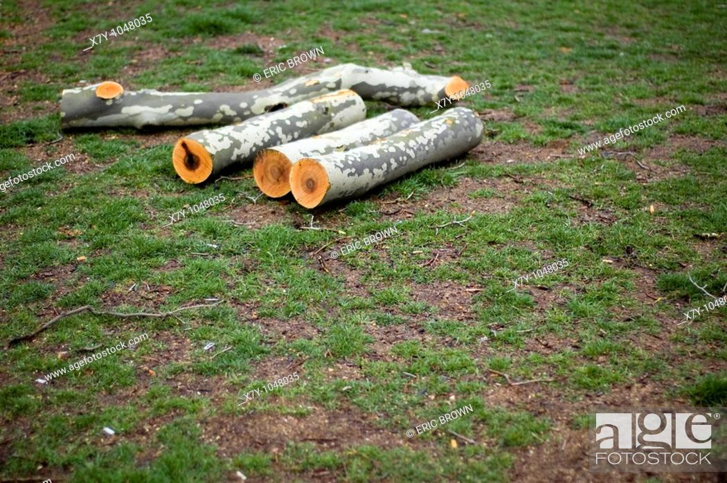 Stock Photo: Logs cut with precision in a park.