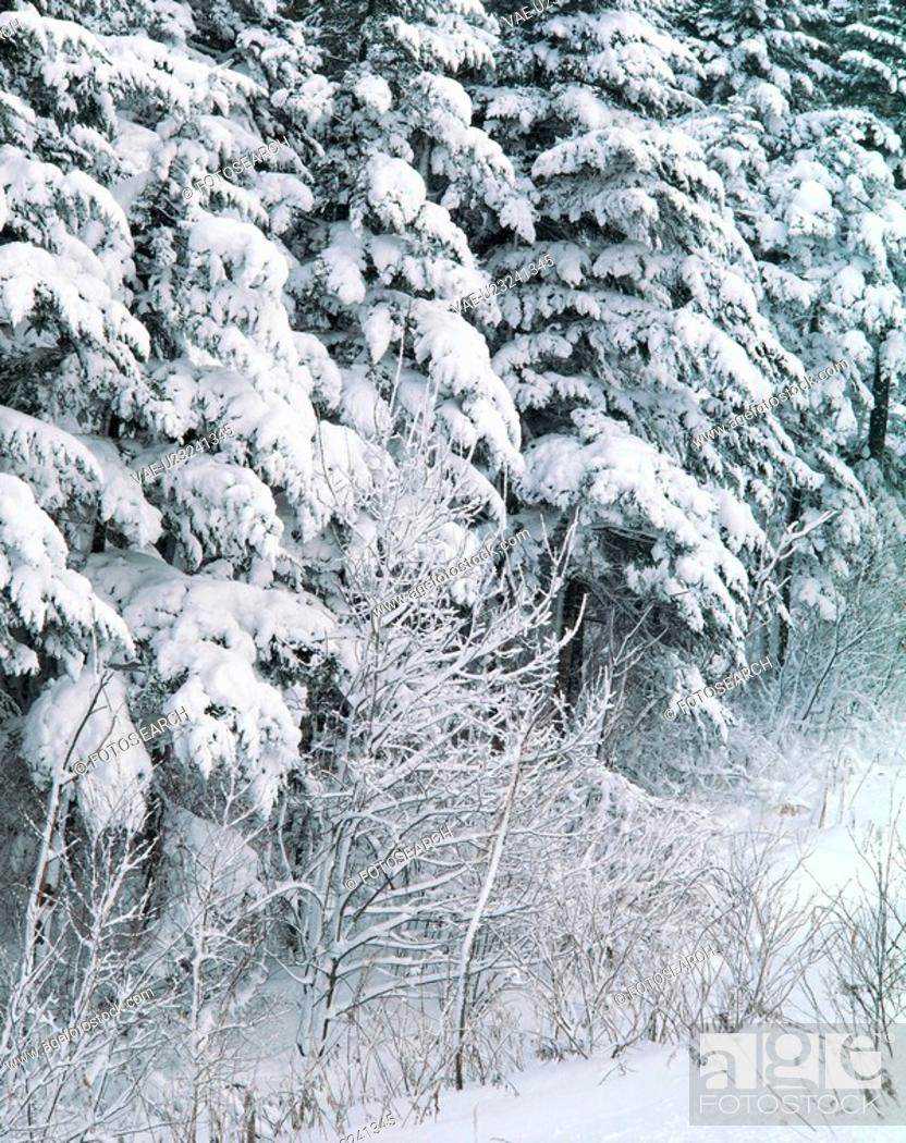 Stock Photo: snow, scenery, tree, winter, landscape, natural world, nature.
