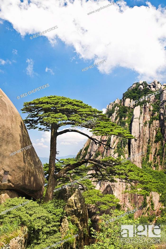 Stock Photo: Tree on a mountain, Huangshan, Anhui province, China.