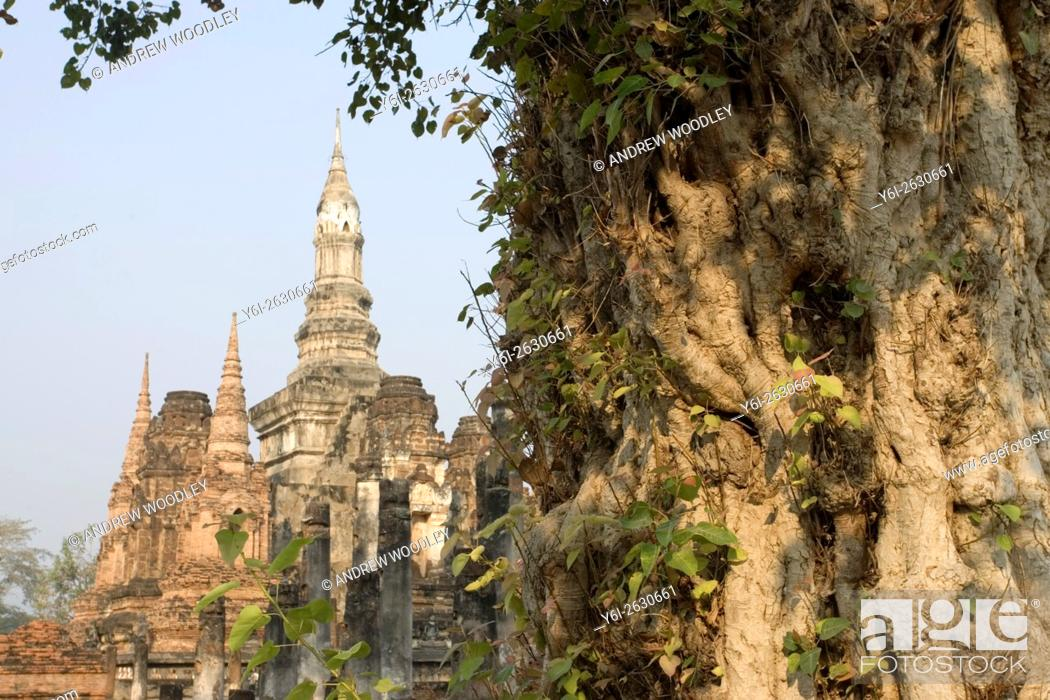 Stock Photo: Gnarled tree trunk and ancient temples Sukhothai Thailand.