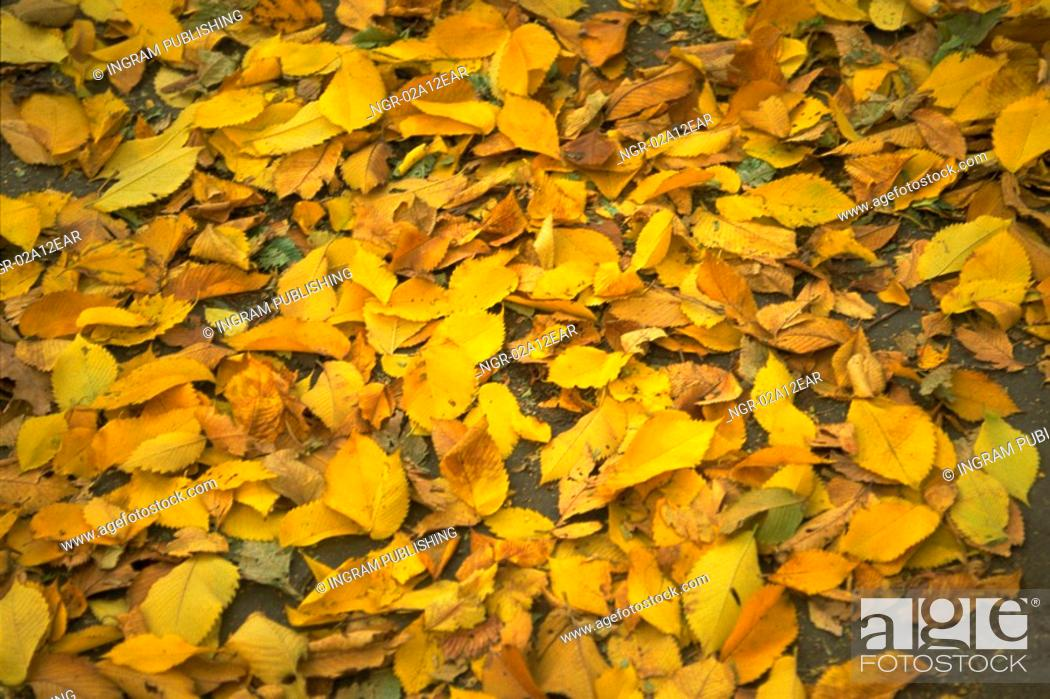Stock Photo: Close-up of leaves fallen on the ground.