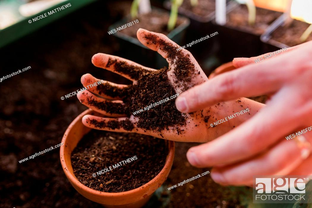 Stock Photo: Dirty hand of son planting and sowing seeds with his father.