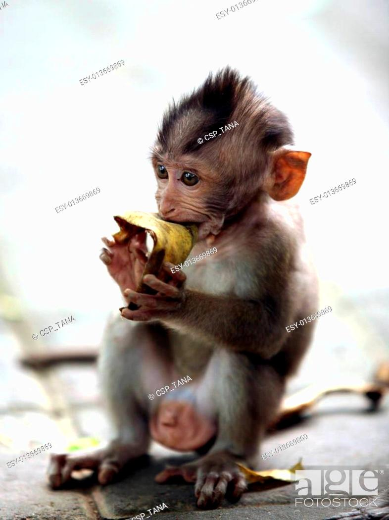 Stock Photo: Child of monkeys.