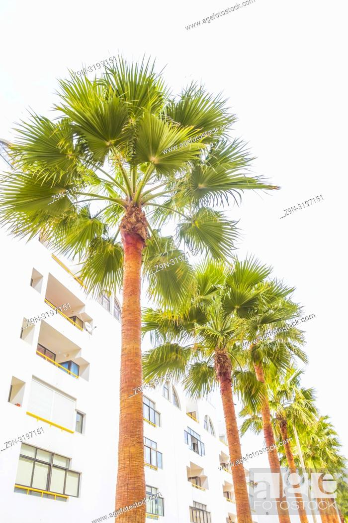 Stock Photo: palm trees newly built residential buildings, quarteira, algarve, portugal.